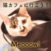 保護猫カフェMeooow!