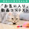 猫ちゃんの「お気に入り」動画コンテストのご応募について