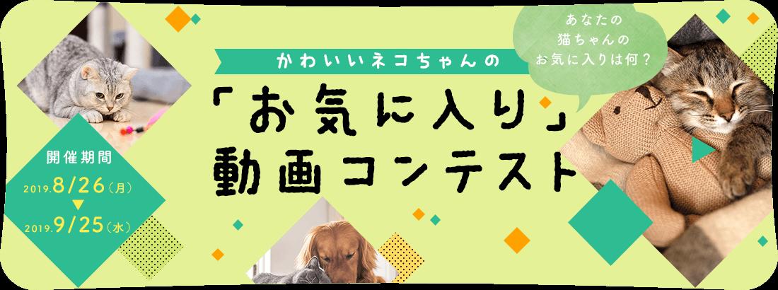 猫ねこ部動画コンテスト2019開催!