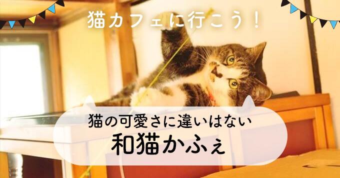 恋愛をして結婚相手を探すように家族を迎えてほしい~和猫かふぇ