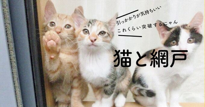 猫の網戸へのいたずらについて、その理由や対策をご紹介します