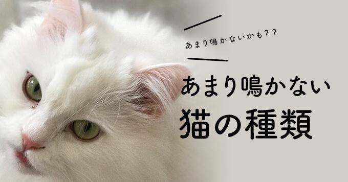 あまり鳴かない猫の種類~マンションでもちょっと安心かも~