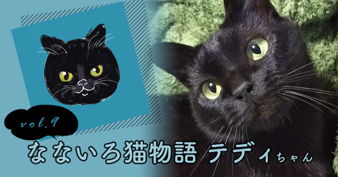 なないろ猫物語Vol.9|「テディ」ー猫エイズキャリアでも溢れる優しさで