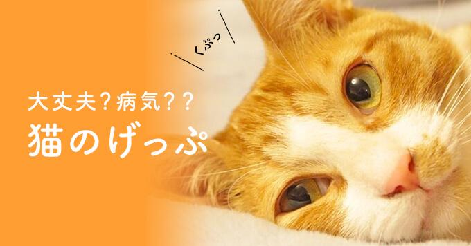 猫のげっぷについて。心配いらないげっぷ&病気が隠れたげっぷ