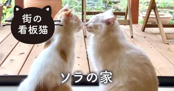 【看板猫】彼らが教えてくれたこと「ソラの家」~ルカラク