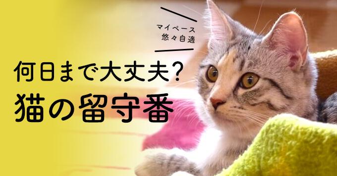 猫は留守番が得意?ほんと?何日まで大丈夫?