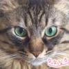 なないろ猫物語Vol.13|「Rio」ー目の前にいる小さな命を見捨てられなくて