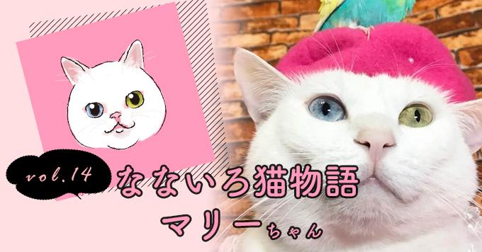 なないろ猫物語Vol.14|「坂口マリー」ー猫が苦手だったわたしを変えてくれた