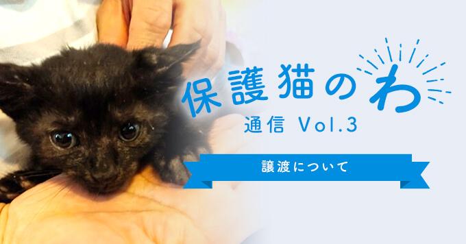 保護猫のわ通信Vol.3|譲渡について