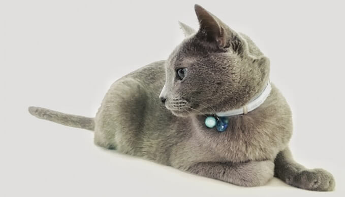 猫_マイクロチップ