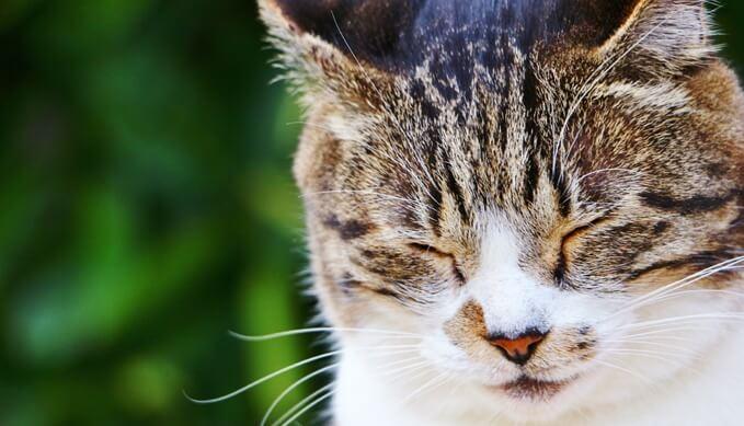 猫_よく寝る