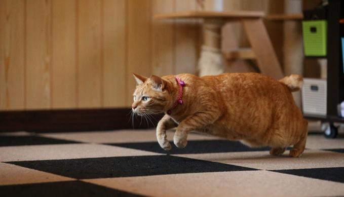 猫の運動会