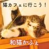 和猫かふぇ