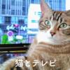 猫もテレビ見るの?猫とテレビの楽しい関係~安全対策もご紹介~
