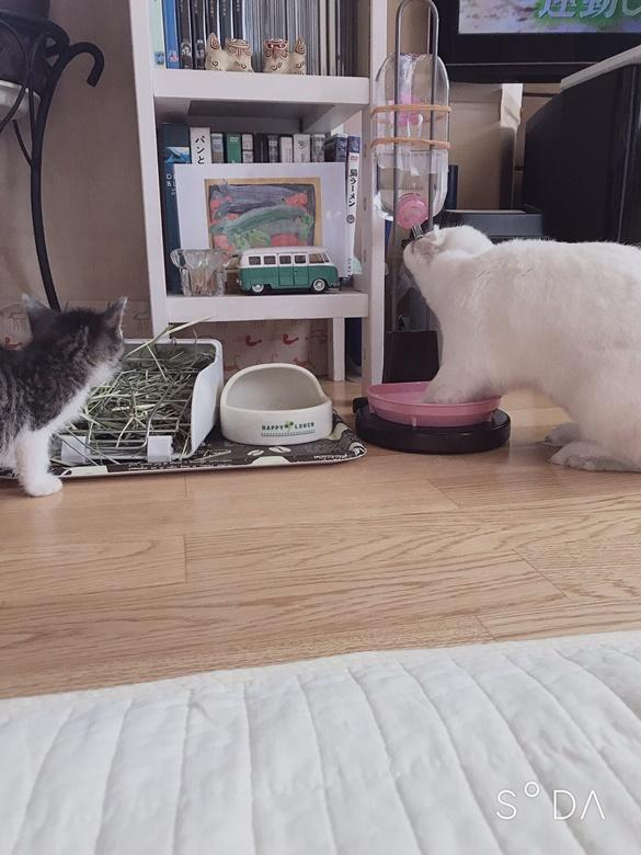 うさぎと猫