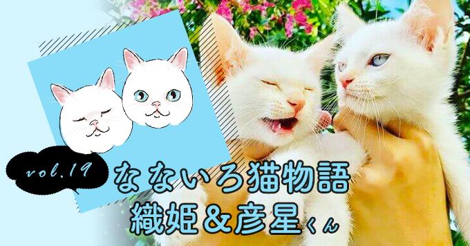 なないろ猫物語Vol.19|「織姫&彦星」ー白猫2匹が起こした小さな奇跡