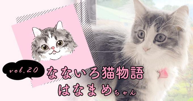 なないろ猫物語Vol.20|「はなまめ」~出会えたことがしあわせ