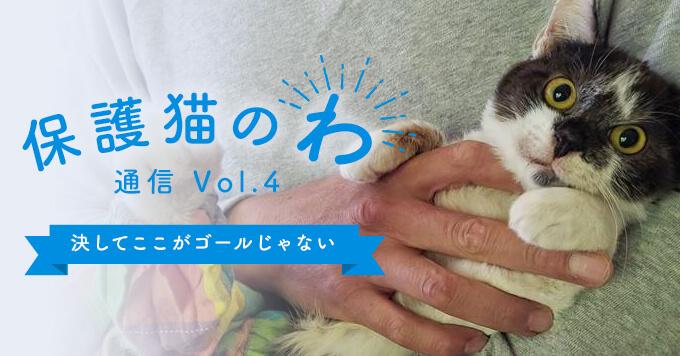 保護猫のわ通信Vol.4|決してここがゴールじゃない