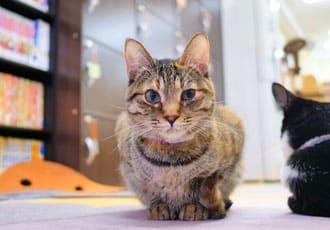 ミャゴラーレ猫ちゃん