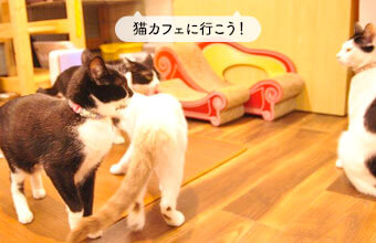保護猫カフェMiagolare(ミャゴラーレ)~お客さんとともに猫を育てていく