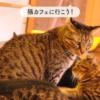 保護猫カフェたまゆら~御蔵島の動物たちを守るために