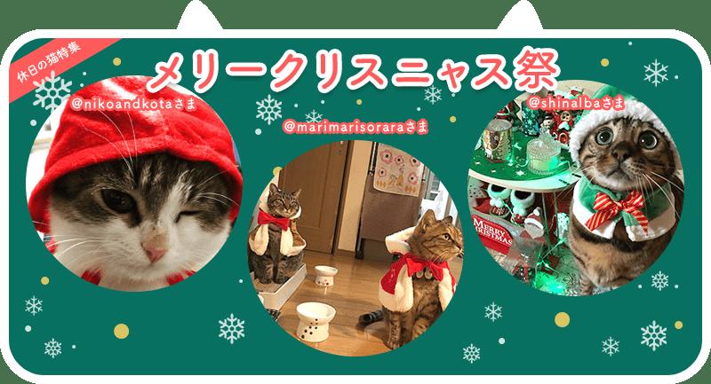 クリスマスにゃんこ