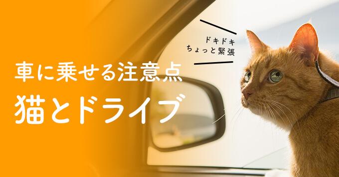 猫を車に乗せる時の注意点は?車、バス、タクシーそれぞれのポイントをご紹介
