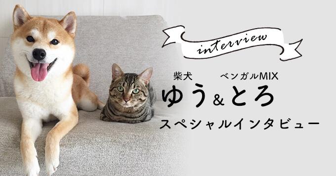柴犬ゆう&ベンガルMIXとろ〜感謝してもしきれない存在