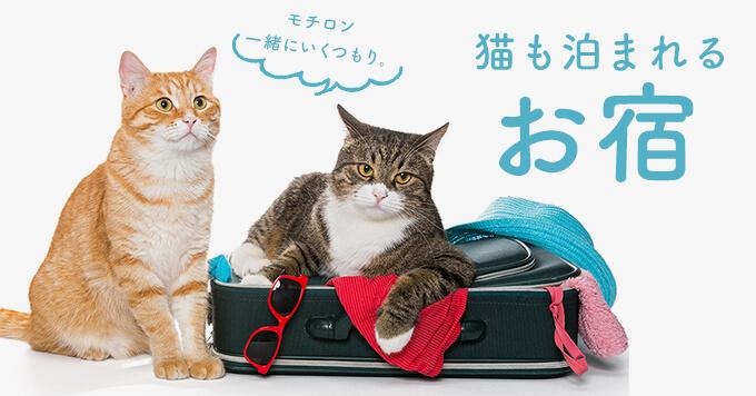 年末年始は猫も一緒に~猫も泊まれる旅館・ホテル~