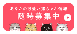 あなたの可愛い猫ちゃん情報随時募集中