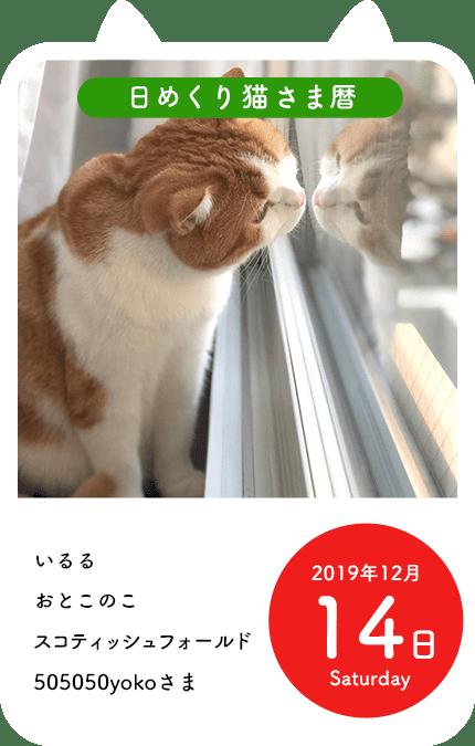 日めくり猫さま暦