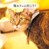 猫カフェ浅草ねこ園~10周年を迎えて