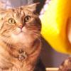 【看板猫】地域の人に愛される「入船のプリンス」のぶにゃがくん~庫-kho-