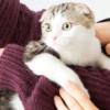お願い抱っこさせて~。うちの猫は抱っこ嫌い!その理由や克服する方法は?