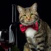 2019ボジョレーヌーボー解禁!猫ラベルのお酒いろいろ探してみました
