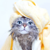 11/26「いい風呂の日」記念!お風呂にまつわる猫トリビアをご紹介