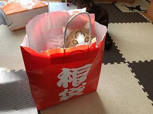猫、福袋に入る