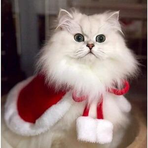 猫マントクリスマス