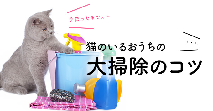猫のいるおうちの大掃除のコツ!まずは猫まわりのここ3点をピッカピカにしちゃいましょう