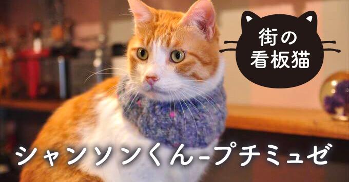 【看板猫】猫の優しさに助けられる日々〜プチミュゼ