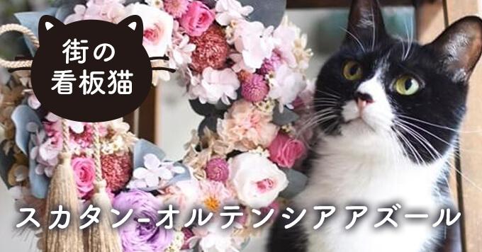 【看板猫】毎日笑いをありがとう!~オルテンシアアズール「スカタン」
