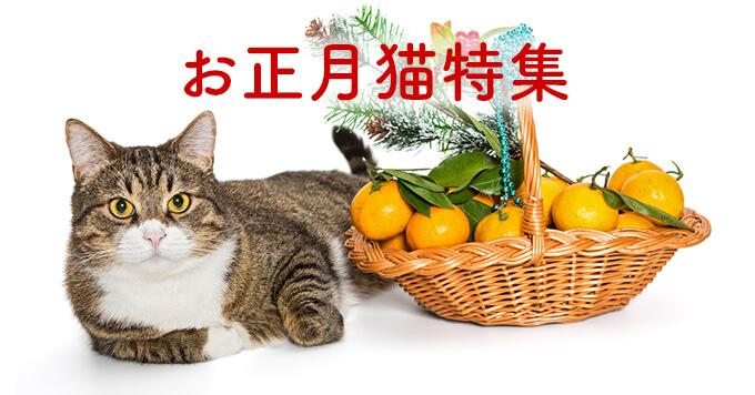 2020新春【正月仕様の猫特集】猫とお正月のコラボが可愛いすぎた!