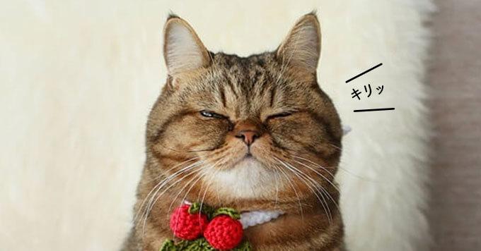 まさかの顔面ストッキング芸猫さま!?クリスマスのご挨拶はちょい薄目で
