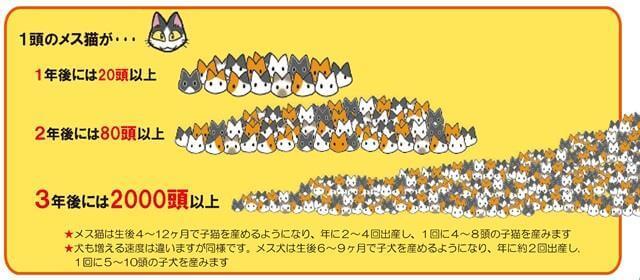 猫繁殖イメージ