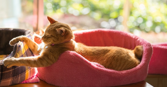 猫ベッドまわり