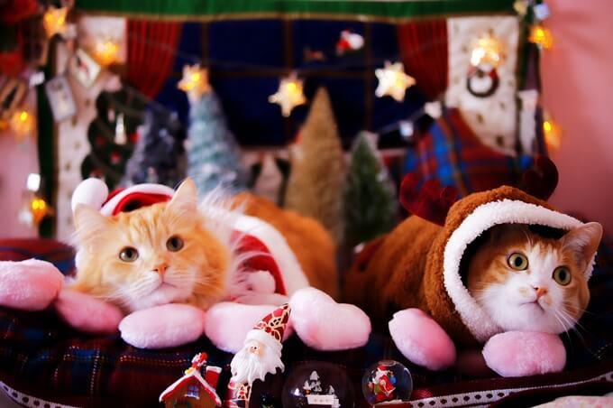猫_クリスマス
