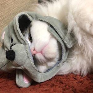 猫、ねずみのかぶりもの