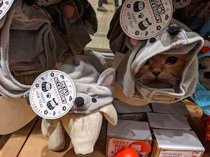 スリーコインズ猫もの1
