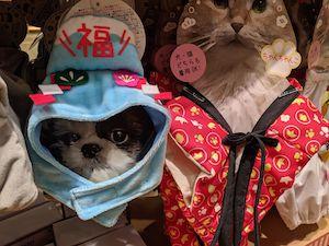 スリーコインズ猫もの2