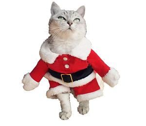 猫のサンタさん服